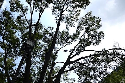 街灯と木1