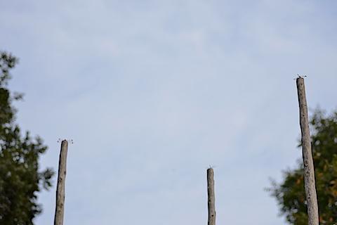 袖ヶ浦公園07
