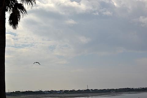 袖ケ浦海浜公園06