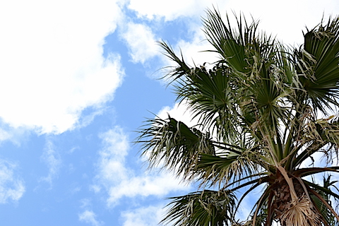 袖ケ浦海浜公園07