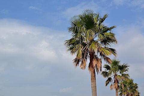 袖ケ浦海浜公園08