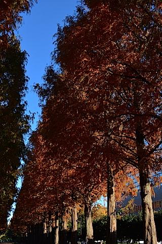紅葉並木06