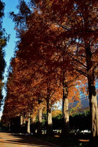 紅葉並木10