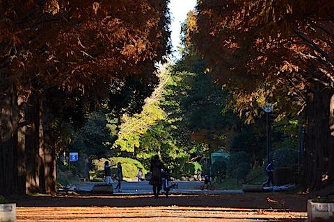 紅葉並木12