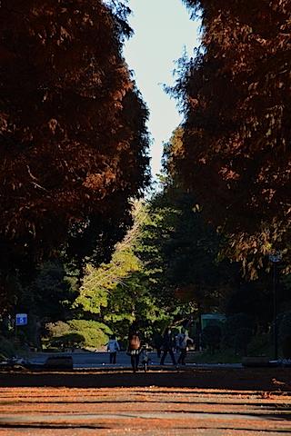 紅葉並木13