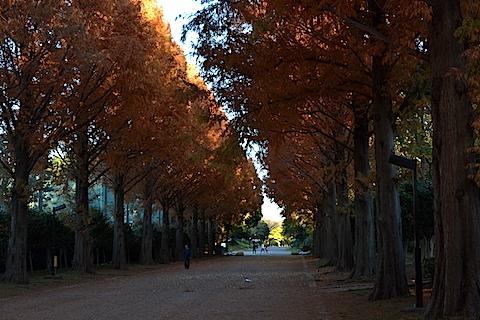 紅葉並木15