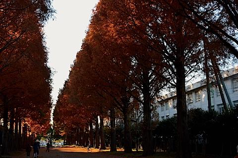 紅葉並木17