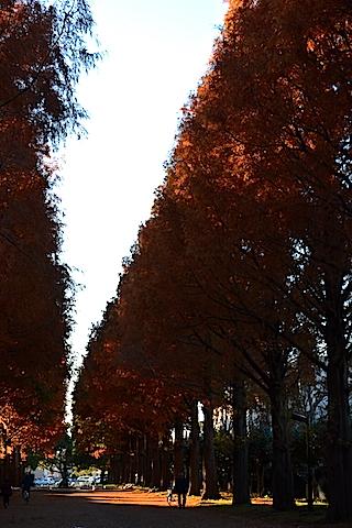 紅葉並木18