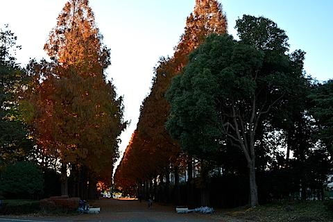 紅葉並木19