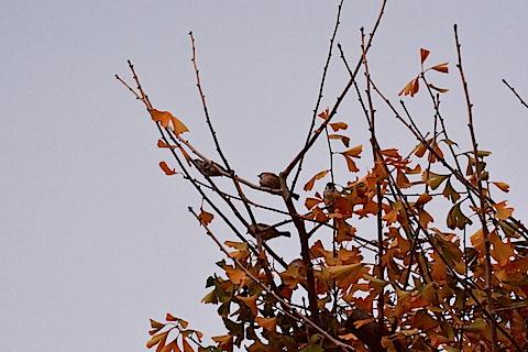 平塚総合公園27