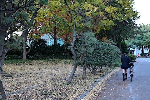 平塚総合公園29