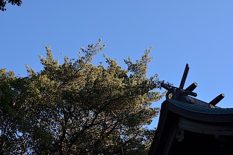 玉崎神社06