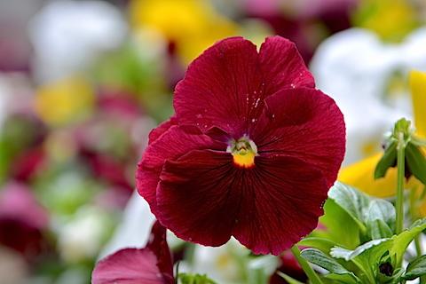 近所に咲いていた花03