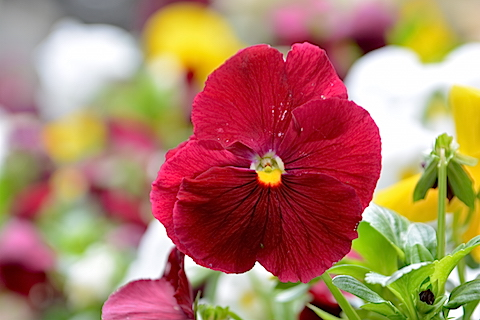 近所に咲いていた花04