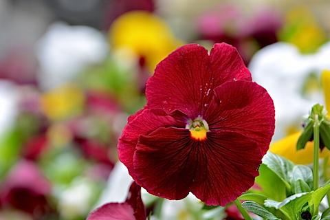 近所に咲いていた花05
