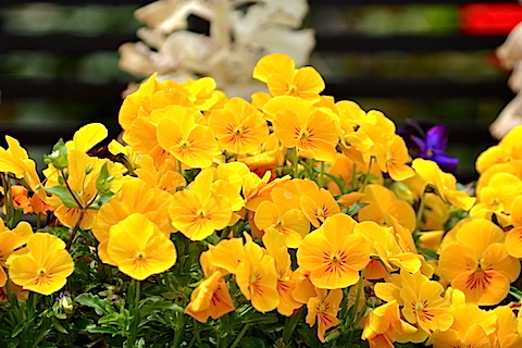 近所に咲いていた花06