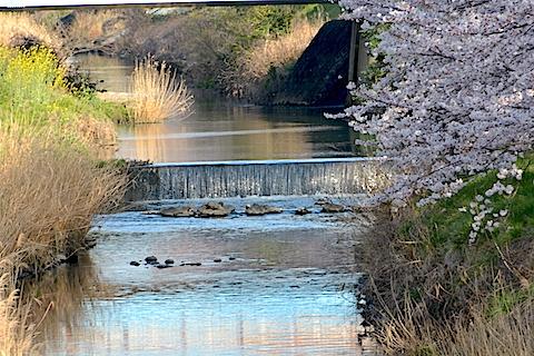 矢那川05