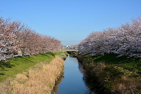 矢那川12