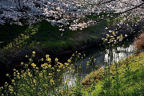 矢那川16
