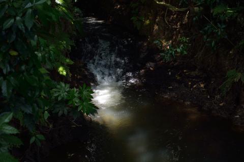 雄蛇ヶ池15
