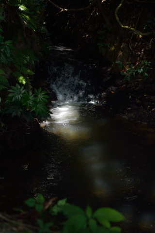 雄蛇ヶ池16