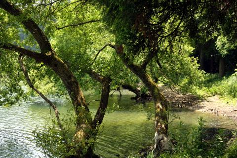 雄蛇ヶ池17