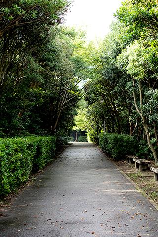 青木の公園29