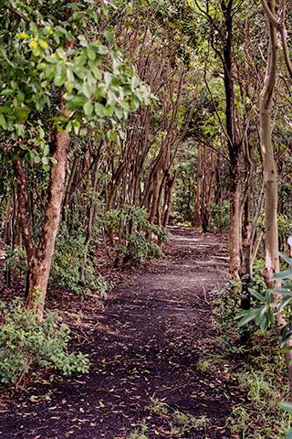 青木の公園30