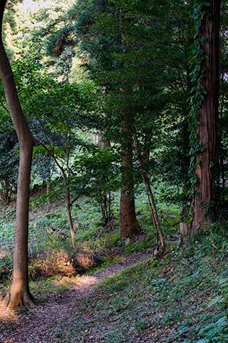袖ケ浦公園プラナー18