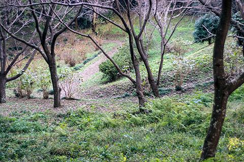 袖ケ浦公園プラナー49