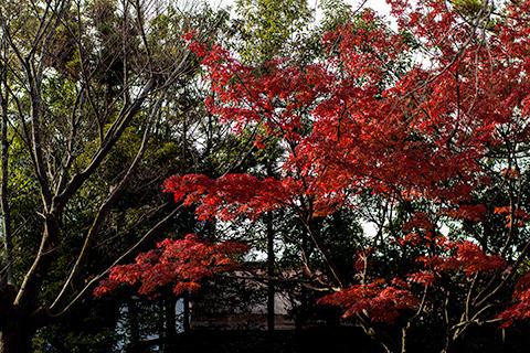 八剱八幡神社05