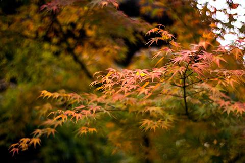 八剱八幡神社09