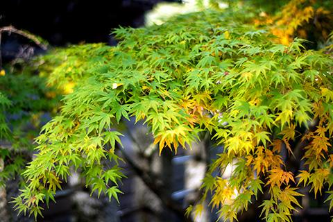 八剱八幡神社10