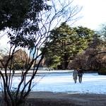 新宿御苑08