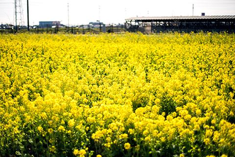 菜な畑ロード12