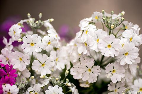 近所の花02