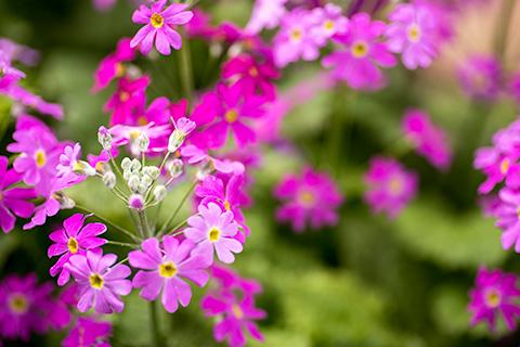 近所の花03