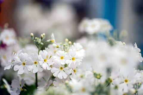 近所の花05