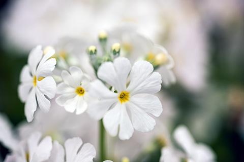 近所の花07