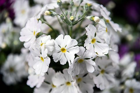 近所の花08