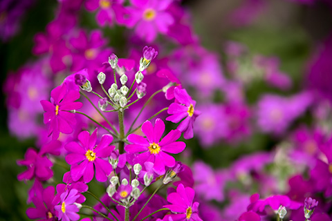 近所の花09