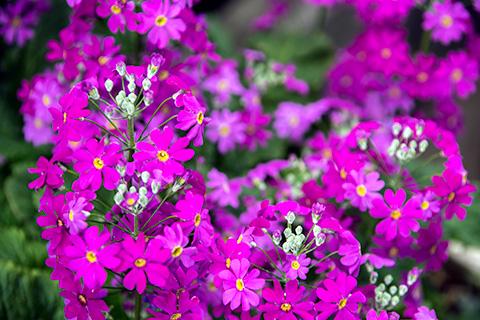 近所の花10
