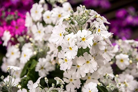 近所の花11