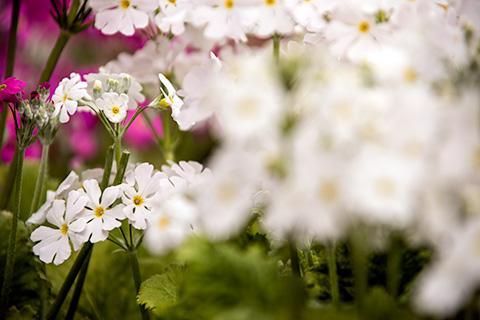 近所の花12