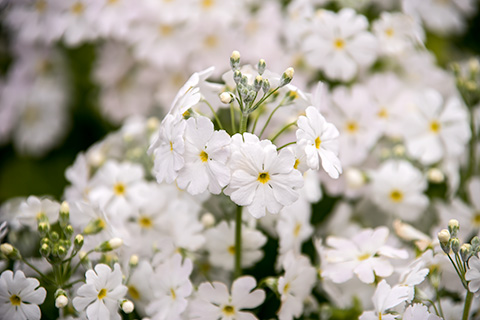 近所の花14