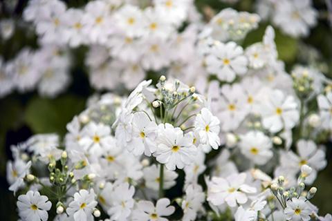 近所の花15