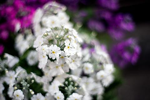近所の花16