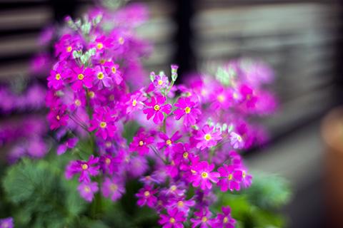 近所の花18