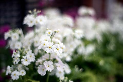 近所の花19