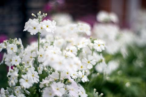 近所の花20